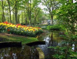 Spring in forest park