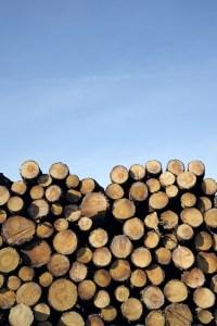 logs (1)